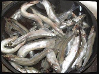 Подготовьте рыбу для рецепта домашних шпрот  — разморозьте, удалите внутренности и головы, промойте