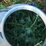 удобрение из травы для огурцов