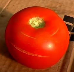 почему трескаются помидоры при созревании при неправильном  поливе